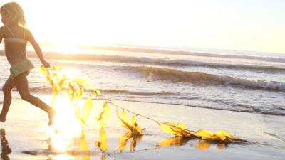 Vortex - Product Seeweed